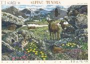 2007 Alpine Tundra 41 Cent US Postage Stamp Unused Sheet of 10 Scott #4198