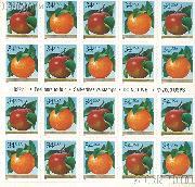 2001 Apple and Orange 34 Cent US Postage Stamp Unused Booklet of 20 Scott #3491 - #3492